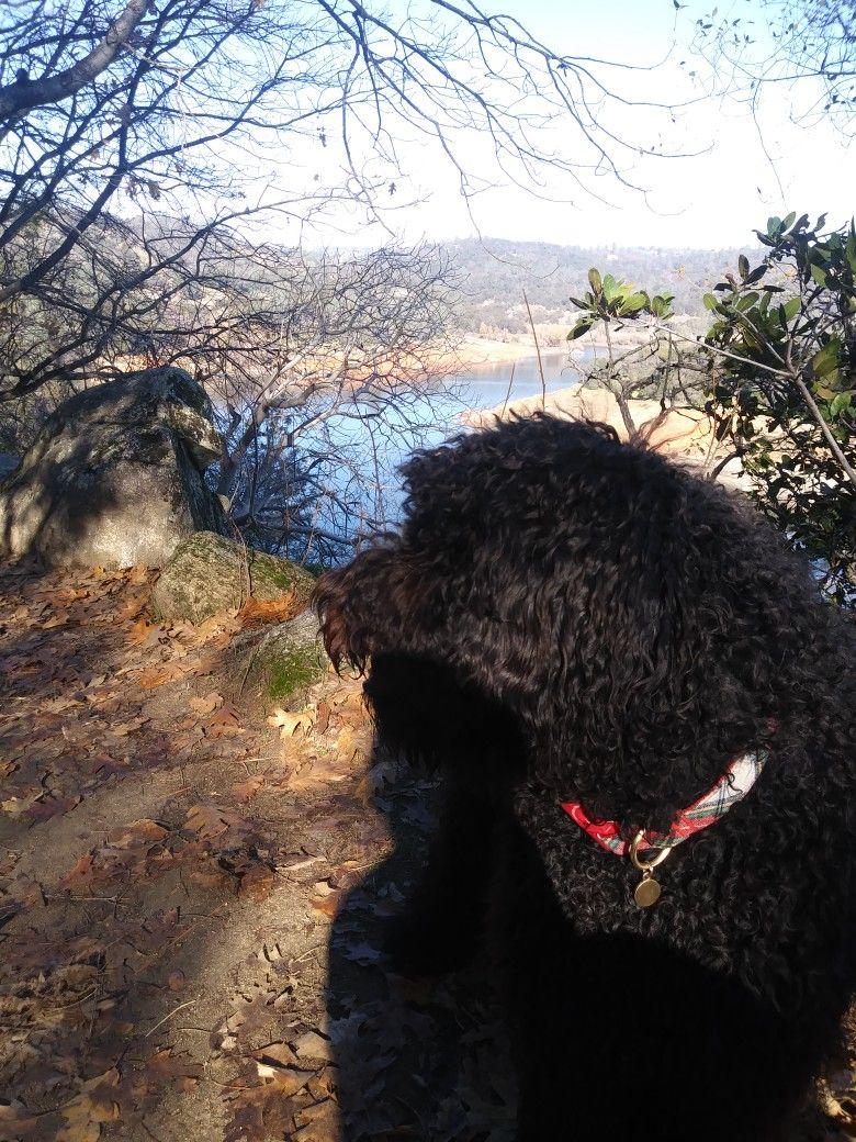 Enzo at folsom lake folsom lake bear dog lake