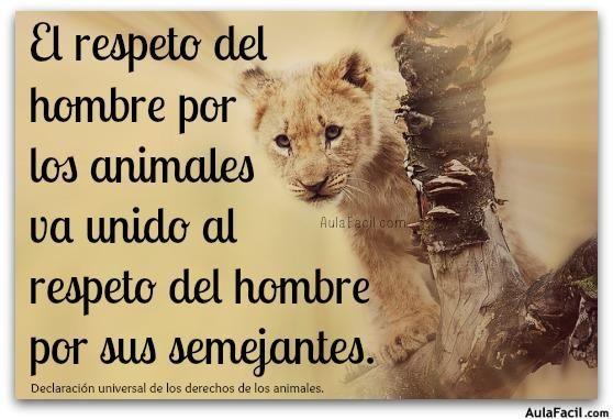 Respeto Por Animales Animales Animales Frases Y