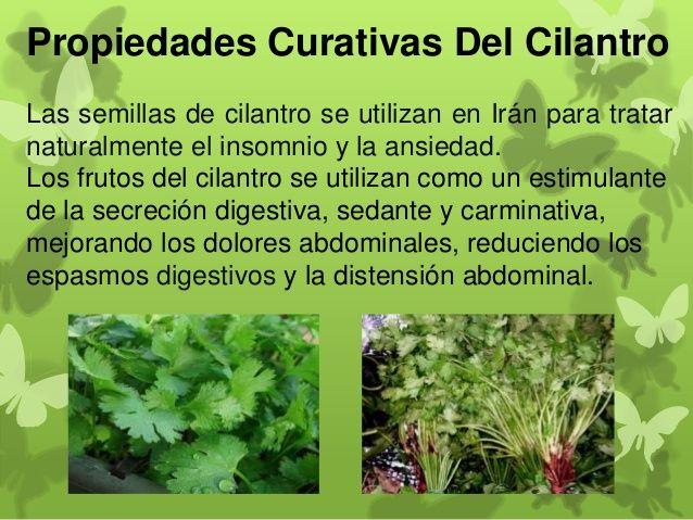 Propiedades del oregano buscar con google alimentaci n for Planta decorativa con propiedades medicinales