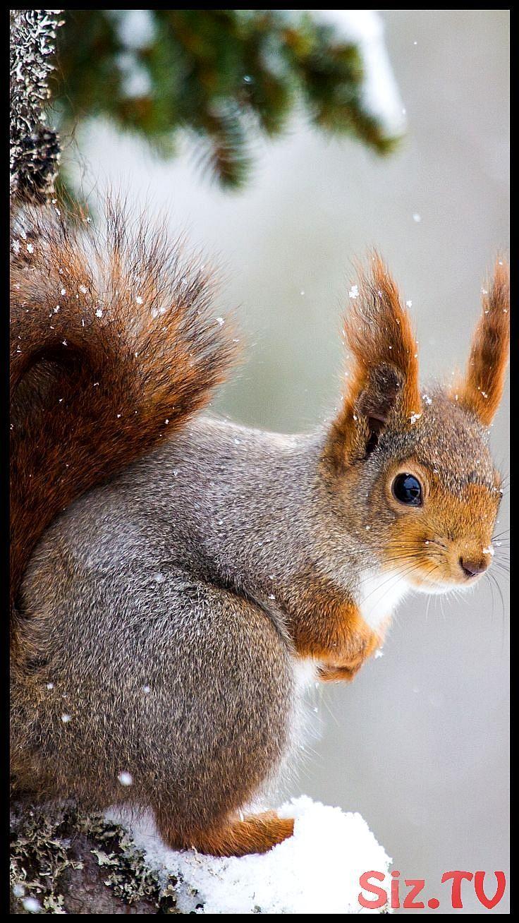 Tier / Eichhörnchen (1080×1920) für das Handy,  #1080×1920 #das #Eichhörnchen #für #Handy #Ti…