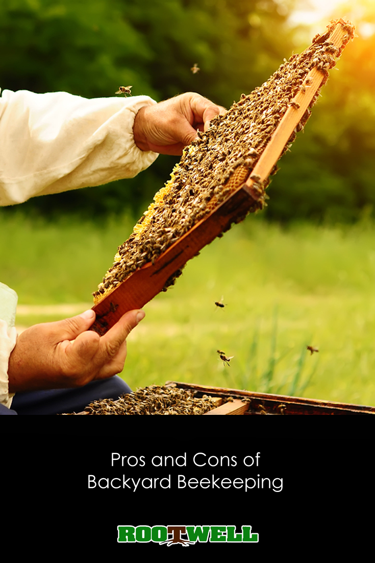 Pros and Cons of Backyard Beekeeping | Backyard beekeeping ...