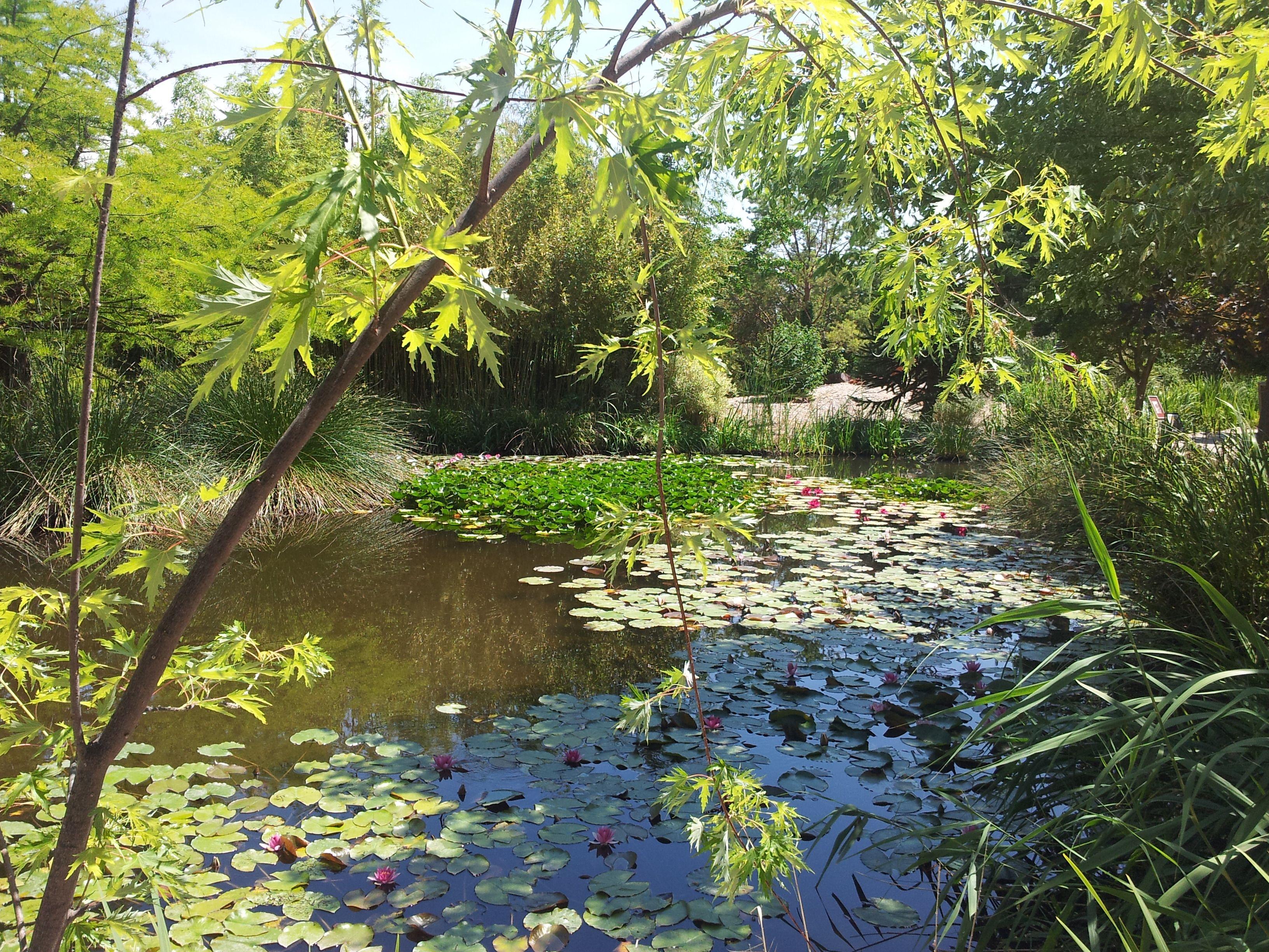 Duc Suzy Marseille Graveson jardin aquatique aux fleurs de l