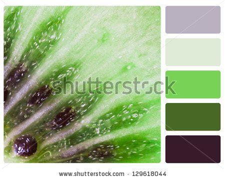 kiwi green color palette - Google Search
