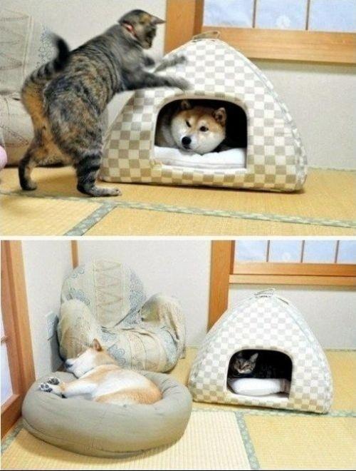 CATS RULE!'n
