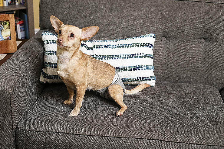 Amazon Com Pet Parents Washable Dog Diapers 3pack Of Doggie