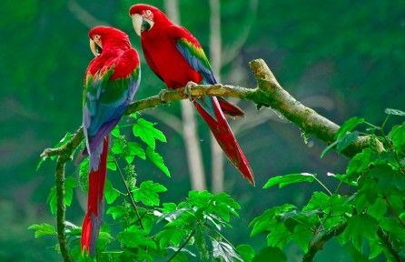 Download Beautiful Parrots On Tree 4k Wallpaper For Free Come And Find More 4k Ultra Hd Wallpapers Beautiful Bird Wallpaper Birds Wallpaper Hd Bird Wallpaper