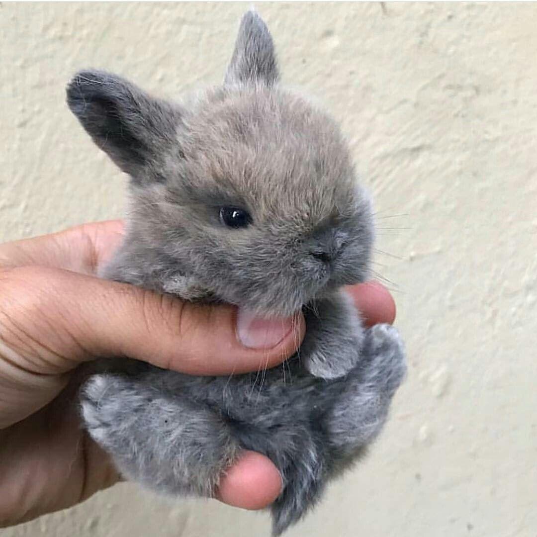 Pin Van Schoko Montez Op Animals Schattige Babydieren Schattigste Dieren Baby Dieren