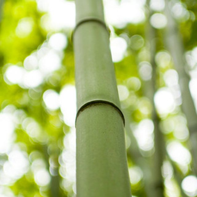Things To Make With Bamboo Canes Crafty Bamboo Canes
