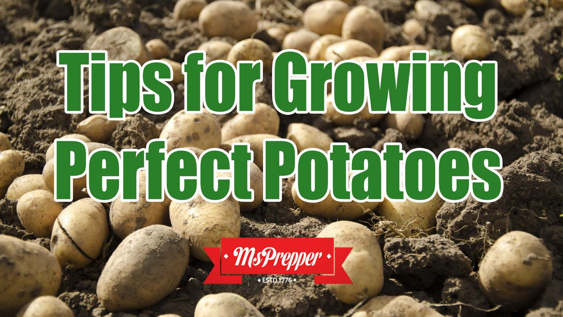 It's almost time to plant your spring garden! If you've never tried potatoes before, take the leap this year. They can yield a great harvest and can be used in a variety of ways to keep your family well fed. Tips for Growing Perfect Potatoes #Prepping #Preppers #Homesteading #Survival #MsPrepper