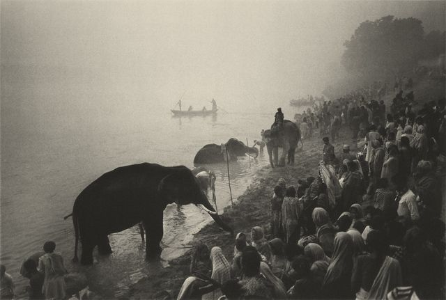 Don McCullin, 'The Elephant Festival, Sonepur Mela, India,' 1978, Hamiltons Gallery