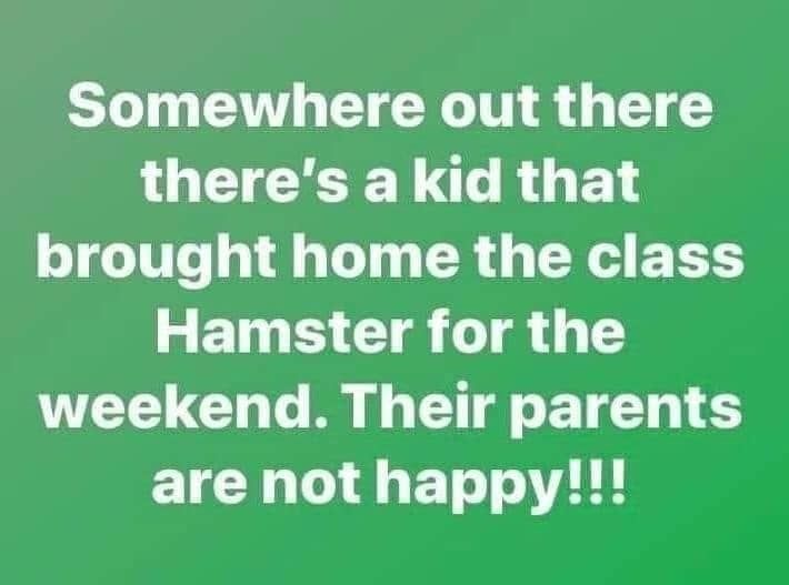 25 Funny Homeschool Memes 2020 Remote Learning Laughs Homeschool Memes Funny Birthday Meme Homeschool Humor
