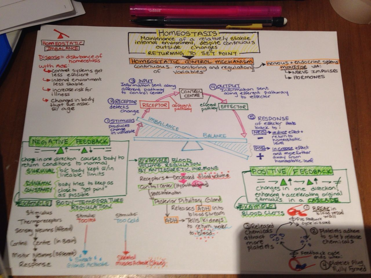 Homeostasis Concept Map Complete Pre Slp Is Pre Slp Concept Map Nursing Concept Map Biology Lessons