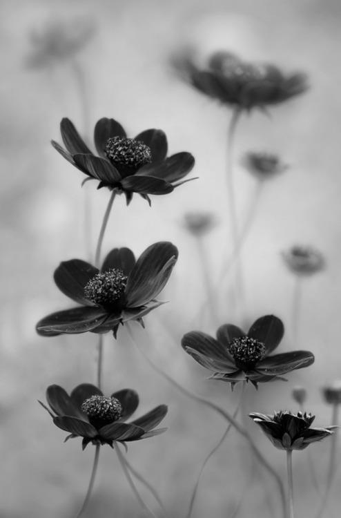 2011 International Garden Photographer Of The Year