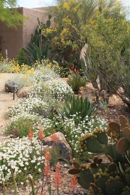 Gallery Cesar Mazier Landscaping Consulting Cesar Mazier Landscaping Consultin Desert Landscape Front Yard Garden Plants Design Drought Tolerant Garden