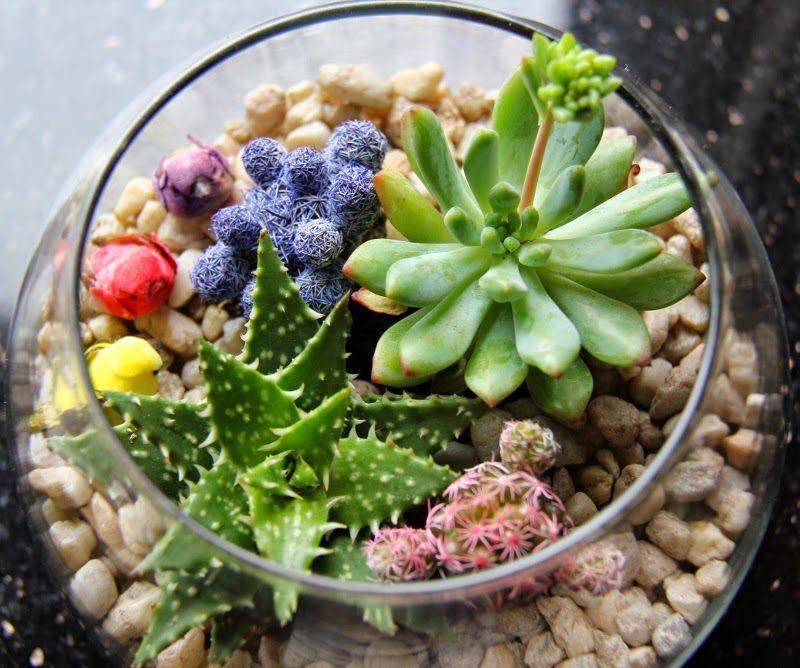 20 ideas para decorar un lindo jard n con suculentas for Detalles para decorar jardines