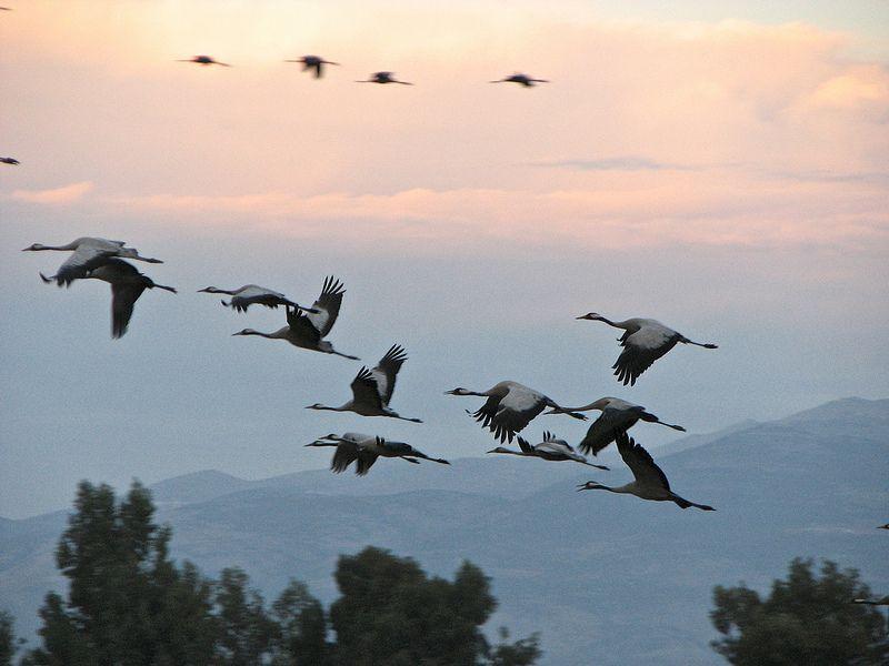 Israel, Hachula National Park