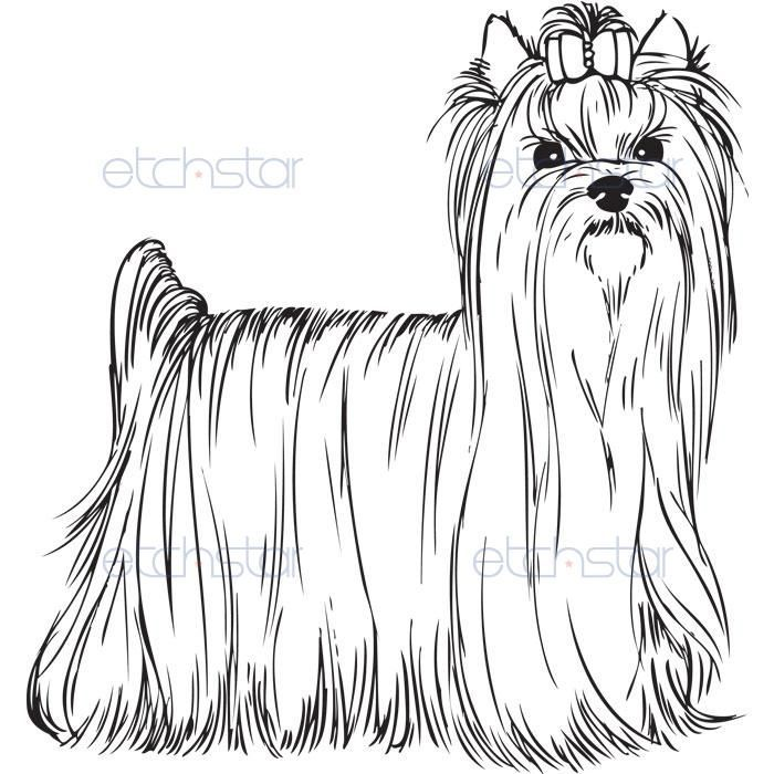 Yorkie Coloring Pages Akc Yorkshire Terrier Standing With