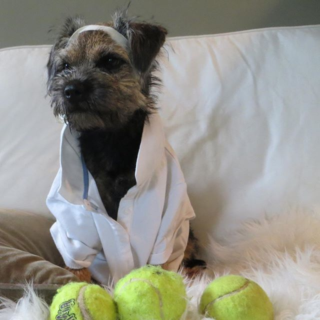 Instagram Photo By Lupa Andbaffi Lupa Via Iconosquare Brown Dog Border Terrier Terrier Dogs