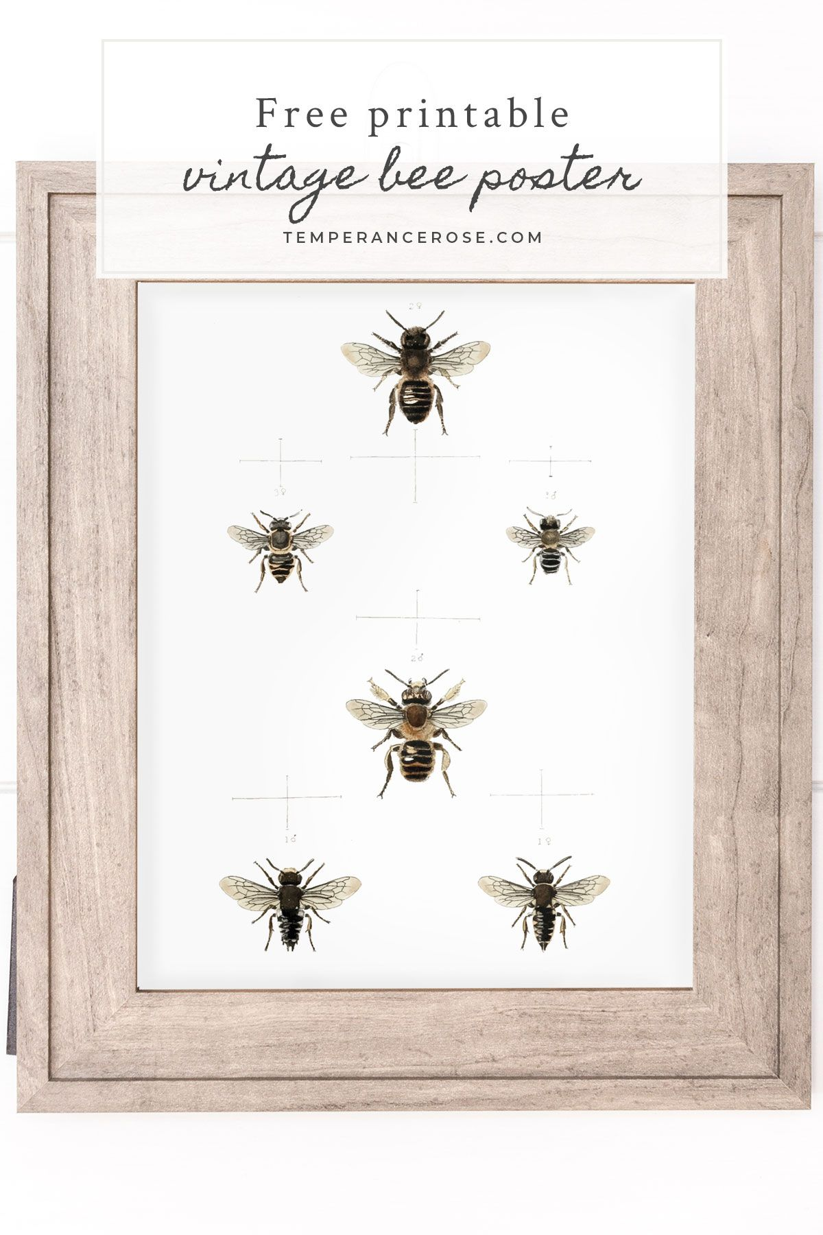 free printable wall art featuring vintage bee on wall art id=80516