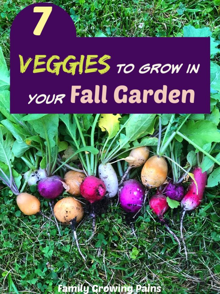 7 Veggies You Must Grow in Your Fall Garden » Family Growing Pains