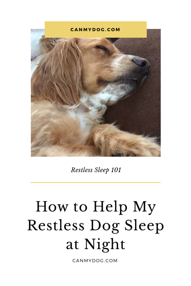 How to Help My Restless Dog Sleep at Night Sleeping dogs