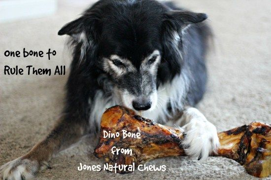 Dino Bone Giveaway from Jones Natural Chews www.DogTreatWeb.com