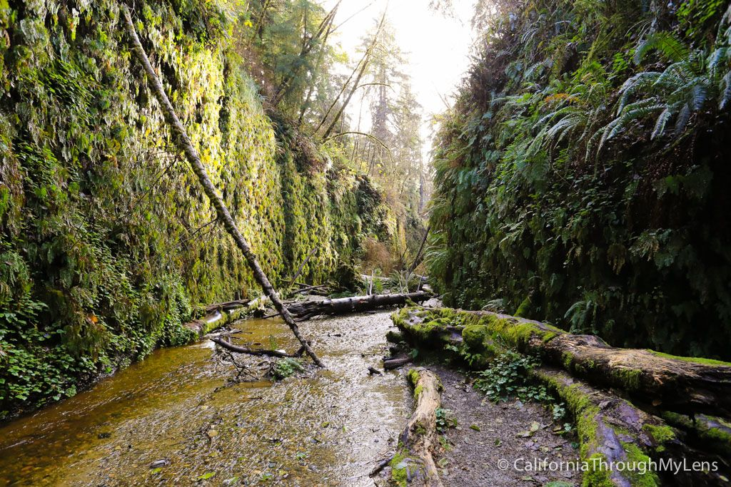 Lets get this out there in the beginning, Fern Canyon is one of the best 1 mile hikes you can do anywhere in California, if not the entire United States. It is a cornucopia of lush plant life, a slow-moving stream and a canyon that has been featured in movies ranging from The Lost World to Tree of …