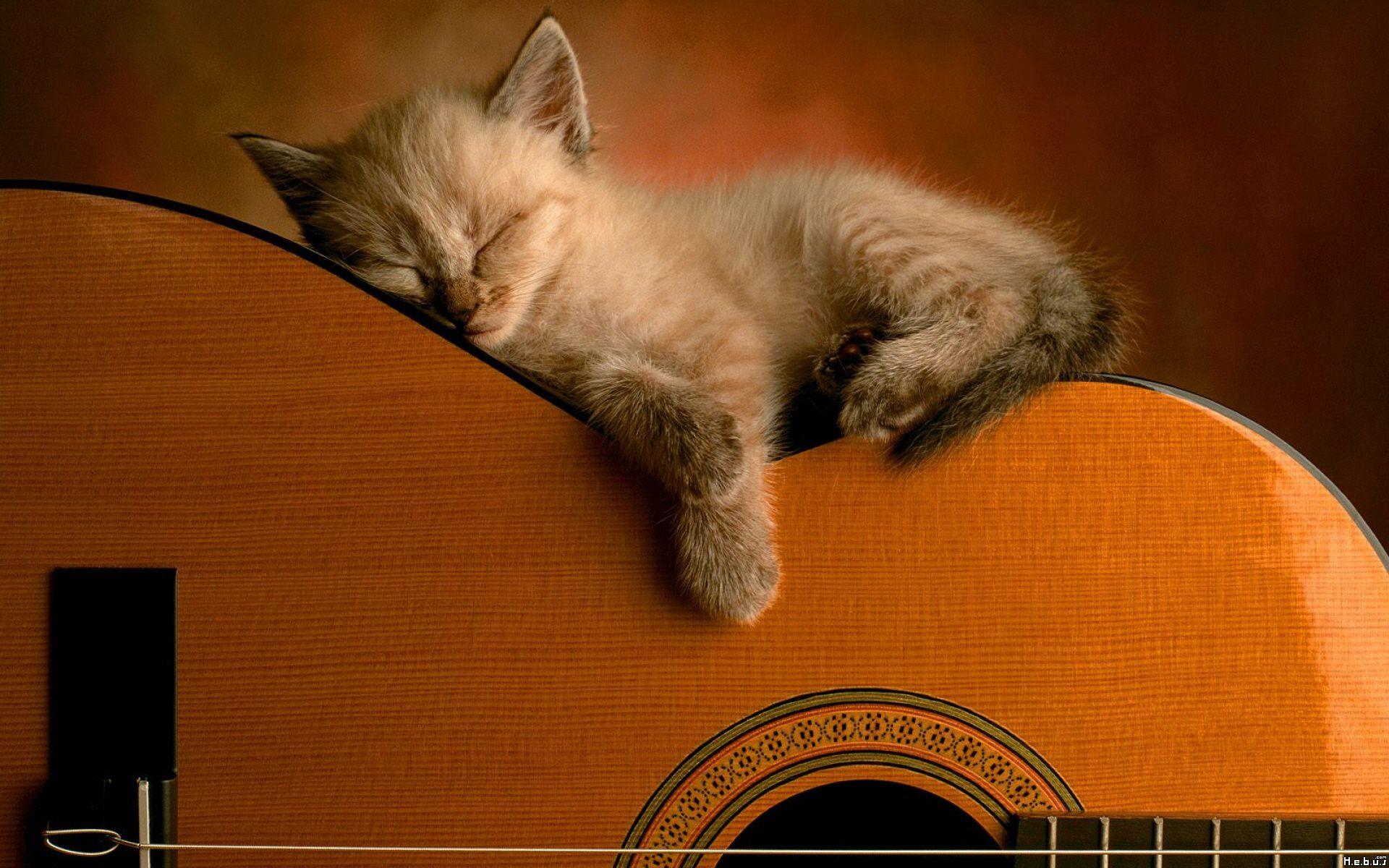 Cute Kitten On Guitar Sleeping Kitten Funny Cat Wallpaper Kittens Cutest