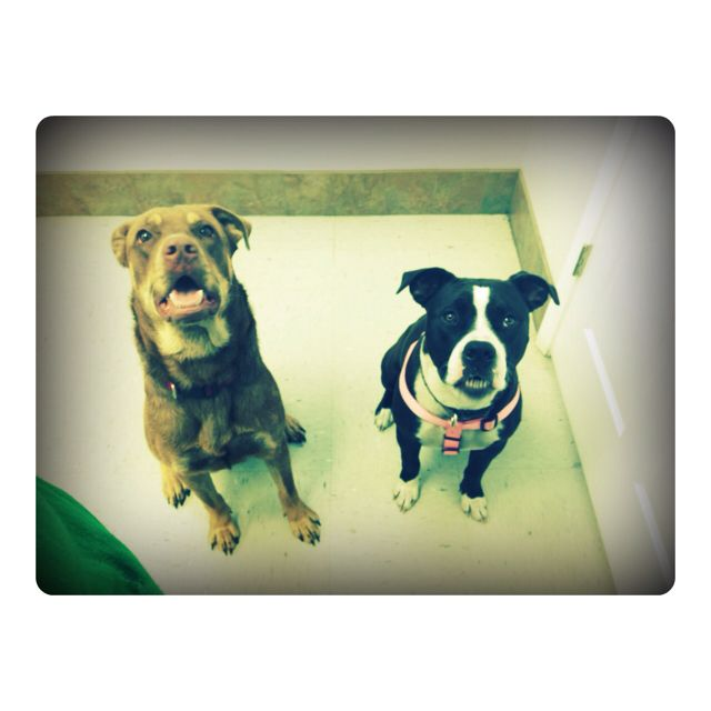 My beautiful babies <3 Bear && Layla.