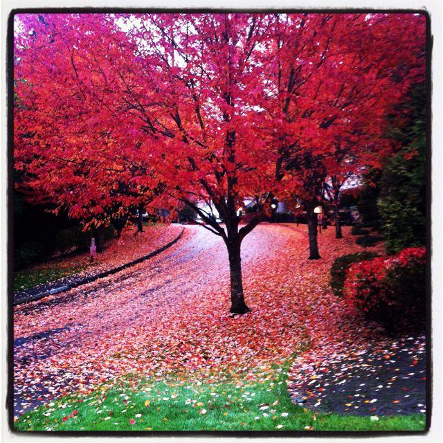 Fall's fiery colors