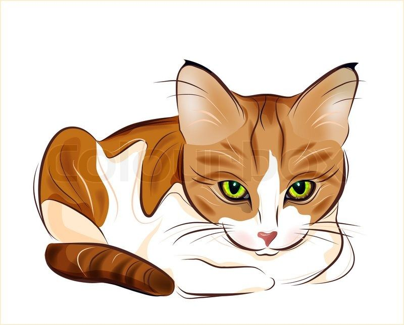 Red Fluffy Tabby Cat With Yellow Eyes Lying On The Couch In Front Of A Bowl Vector Colourbox Cat Vector Tabby Cat Cat Artwork