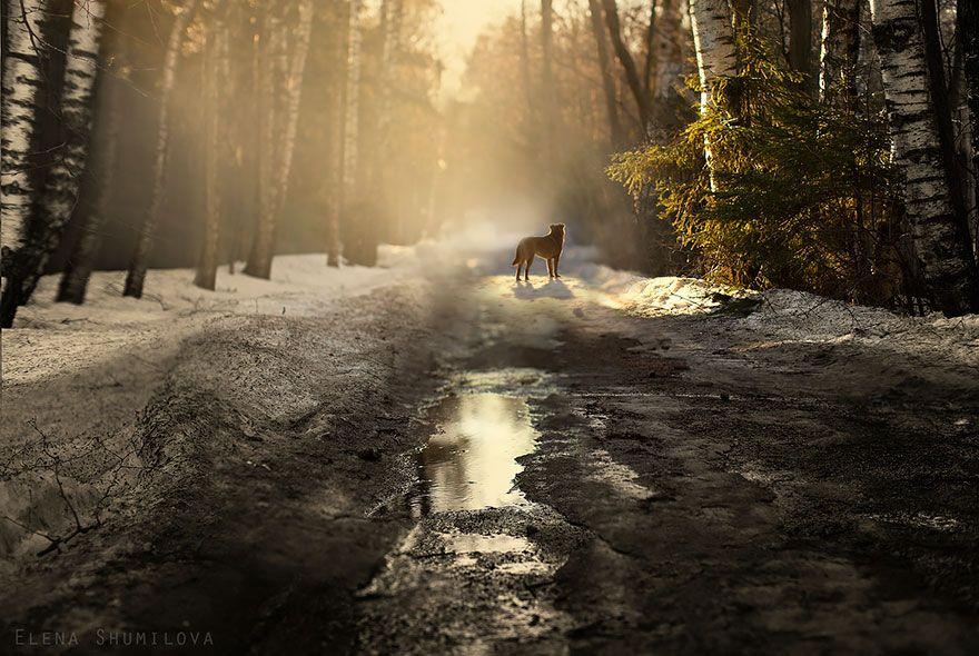Camino de bosque de Rusia