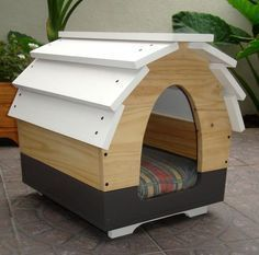 Rooms Designed for Pets Costa Rica