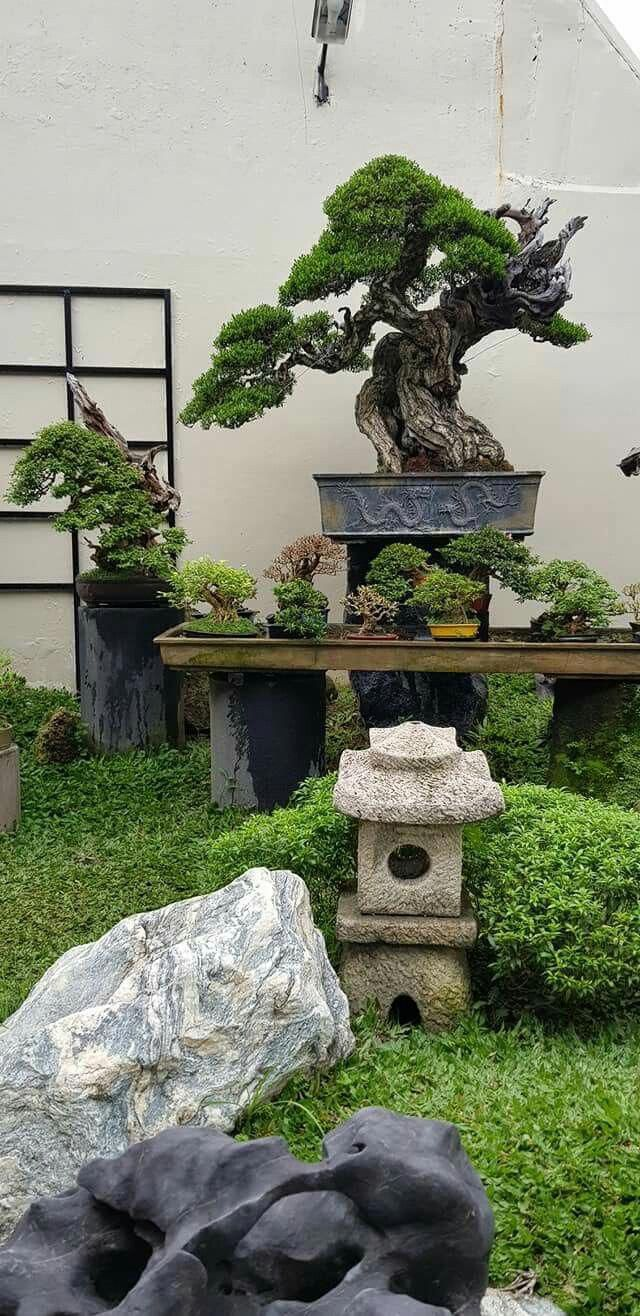 Achat Arbre D'intérieur Backyard Of A Bonsai Fancier Typesofbonsaitrees Plantes