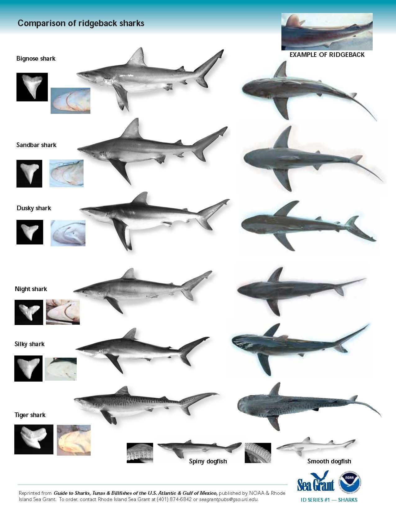 Shark Identification