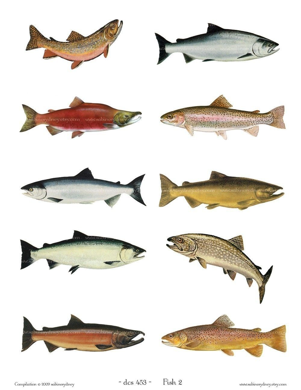 Vintage fish illustrations 2 digital sheet 454 buy 3 for Koi larousse