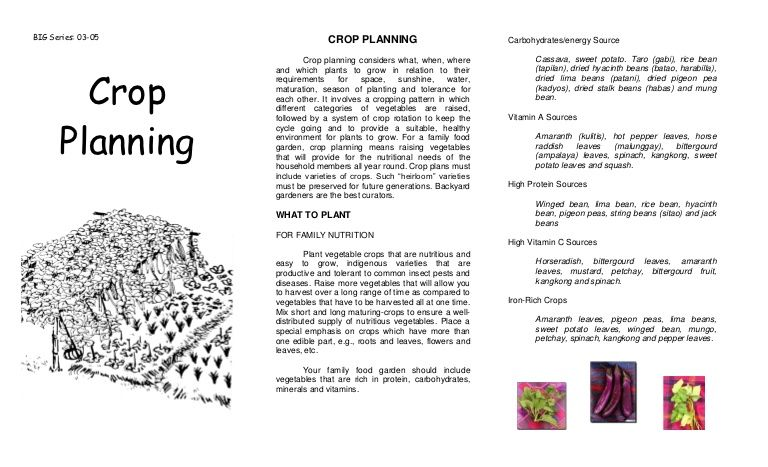 Companion Planting And Crop Planning Agricultural Training