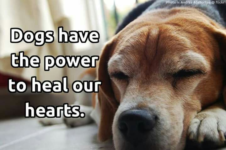 Dogs Have The Power To Heal Our Hearts Dogs Dog Love Funny Dogs