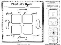 Life Cycle Of A Plant Worksheet For Kindergarten & 1st grade ...