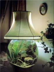Good Aquarium Lamp  This Makes Me Sad. Your Fish Would Die With The Constant  Temperature