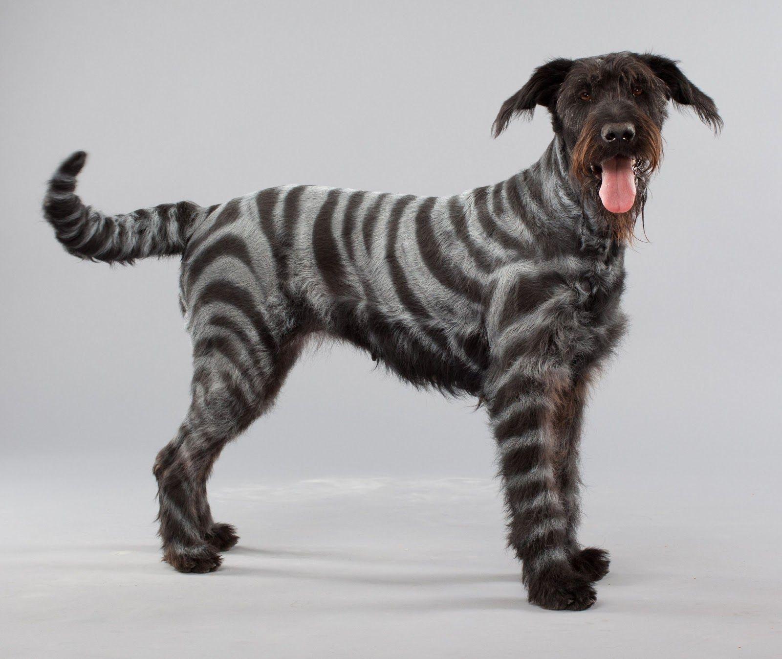 Dog Pet Paint Colour Spray