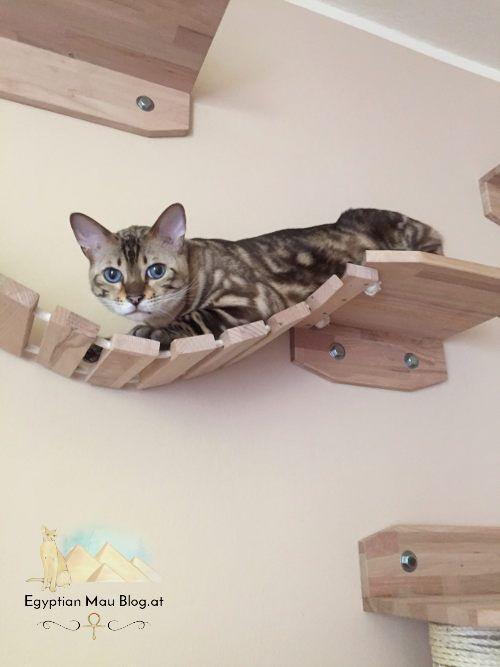 Spielplatz f r katzen eine kletterwand carl - Kletterwand katze ...
