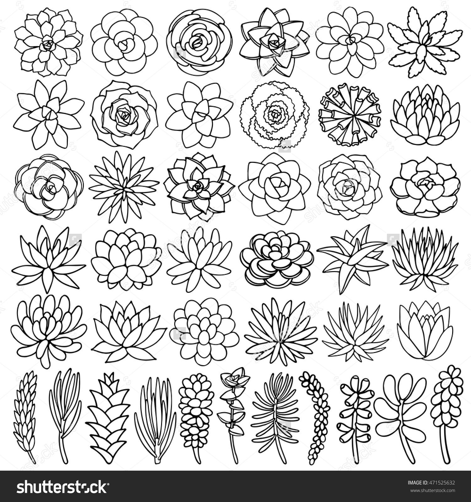 Hand Drawn Line Succulent Plant Isolated On White