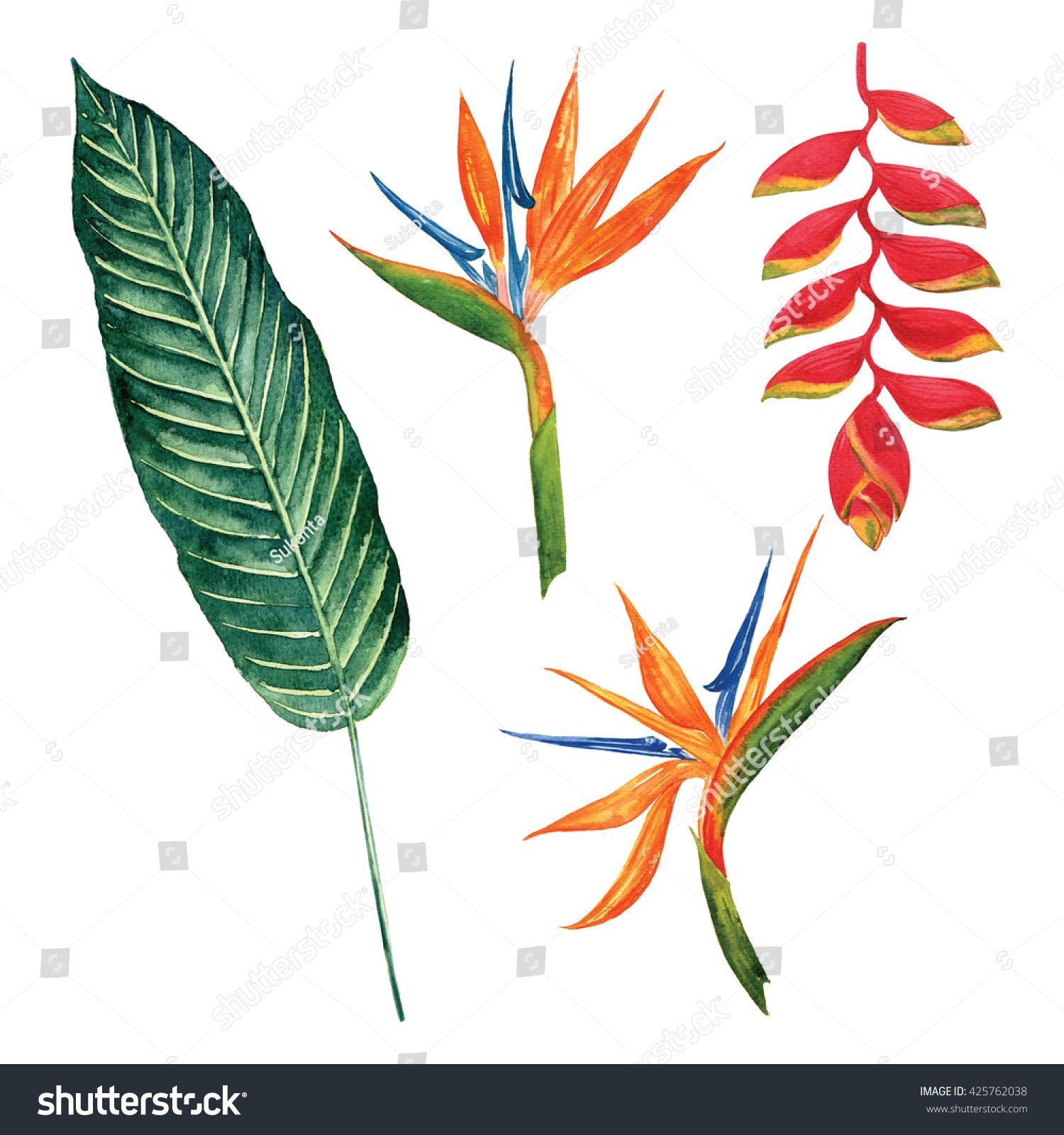 Bird Of Paradise With Leaf Tropical Jungle Watercolor Object Isolated On White Background Birds Of Paradise Plant Birds Of Paradise Flower Art