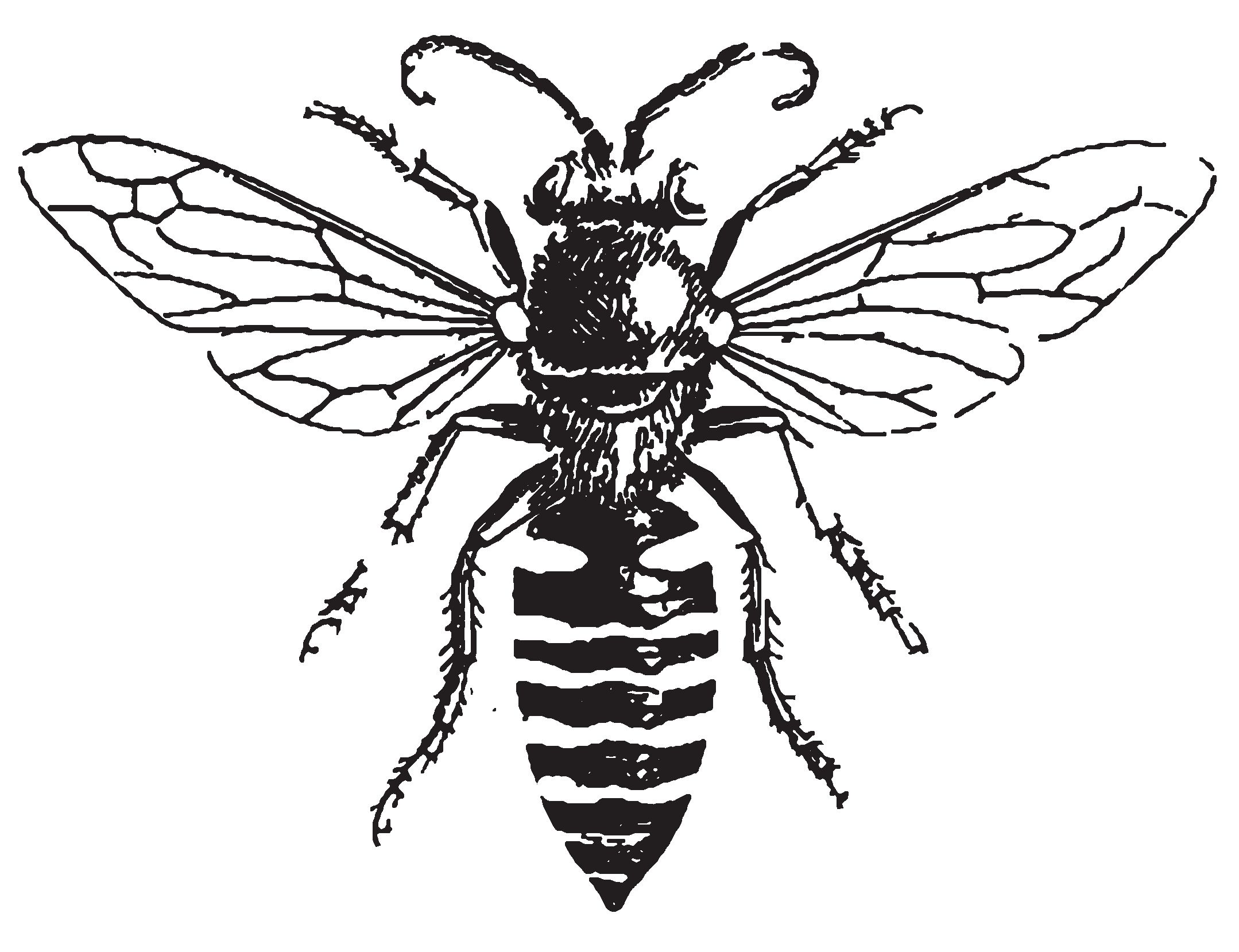 Line Drawing Bee : The bees tattoo and body art
