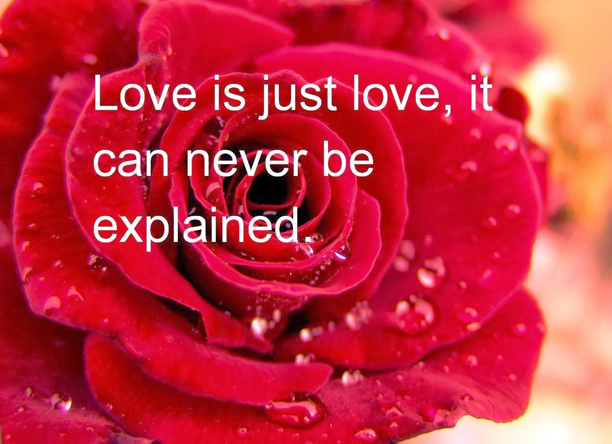 Love Is Just Love It Can Never Be Explained Datingquotes Valentines Day Love Quotes Happy Valentine Day Quotes Valentine Quotes
