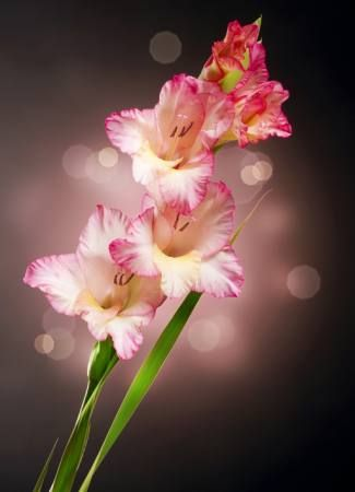 pixwords čeština image answer / hint / help for subbotina , flower