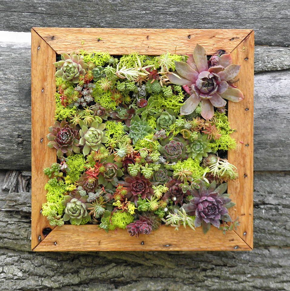 Succulent Vertical Living Wall Art Kit 12 Inch Buy By Sosucculent 6500