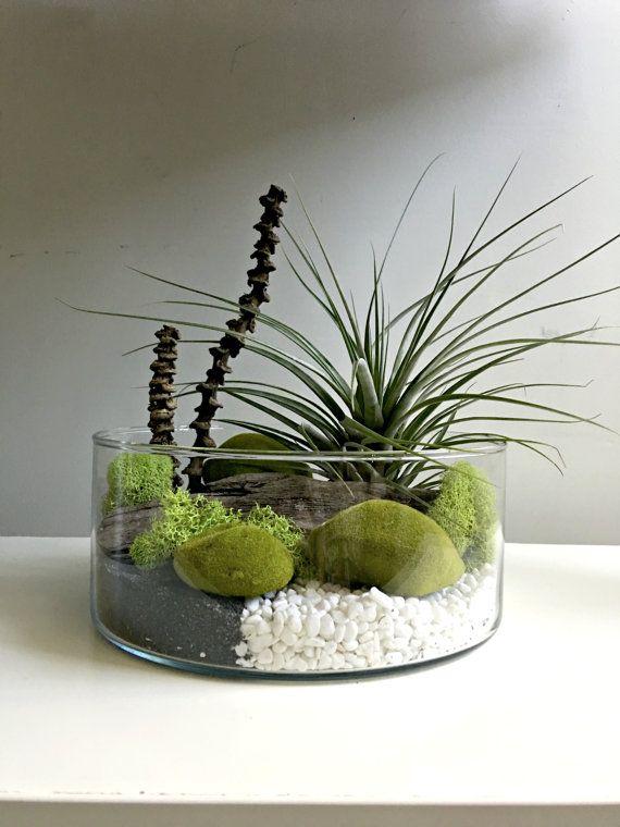 Large air plant terrarium glass vase Living by omorfigiadesigns - Large Air Plant Terrarium Glass Vase Living By Omorfigiadesigns