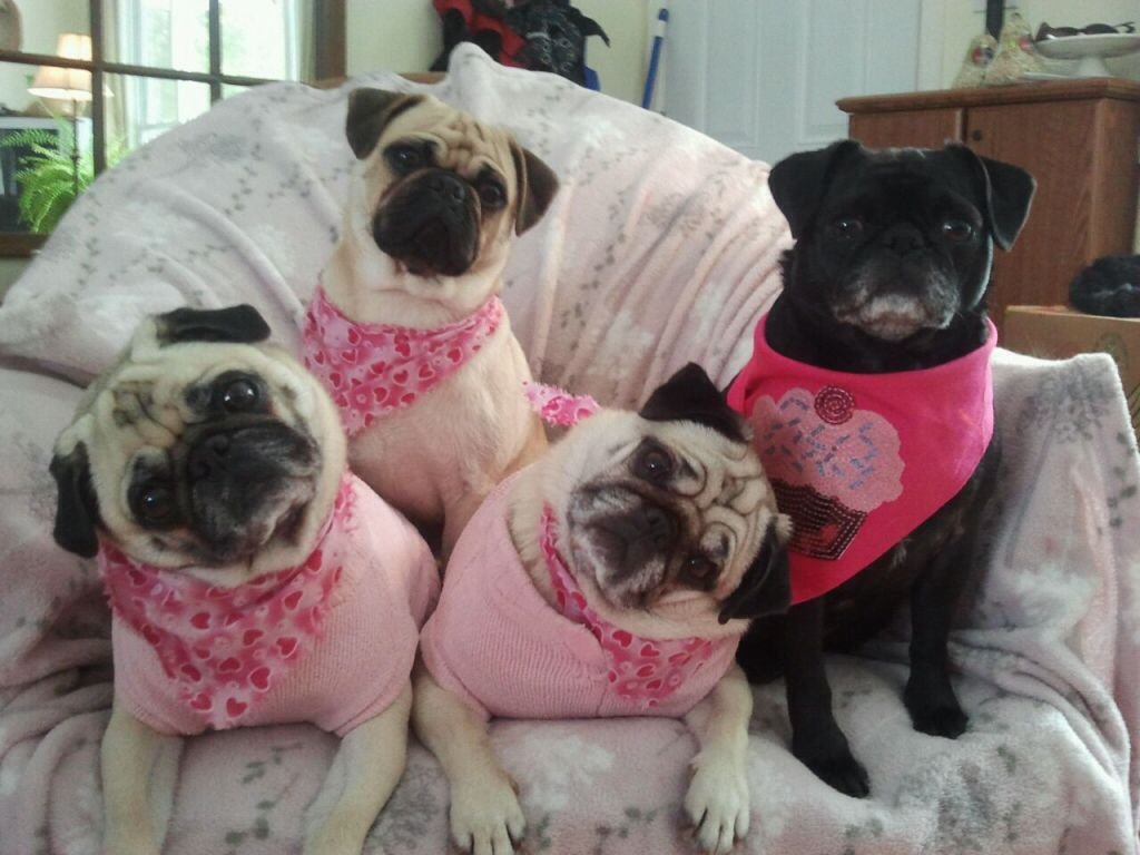 valentine's day pug stuffed animal